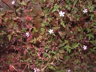 Flowers Photographs - Picture of Tiny white and purple flowers with green and purple foliage against a wooden fence