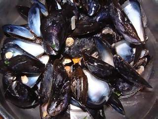 Food Photographs - Picture of Empty mussels shells after a meal