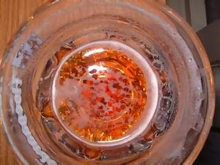 Food Photographs - Picture of View into half empty glass of belgian trappiste beer Leffe Blonde