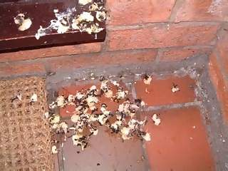 Miscellaneous Photographs - Picture of Bird droppings on teracotta tiles and welcome mat