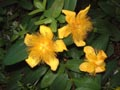 Bright yellow flowers - Bright,yellow,flowers